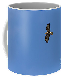 Coffee Mug featuring the photograph Buzzard 05 by Brian Roscorla