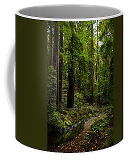 By The Stream In Muir Woods Coffee Mug
