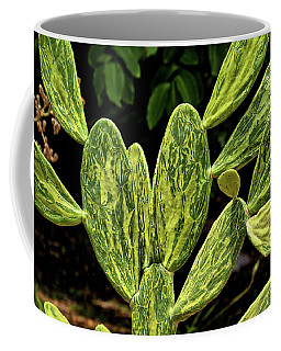 Coffee Mug featuring the photograph Cactus Patterns by Richard Goldman