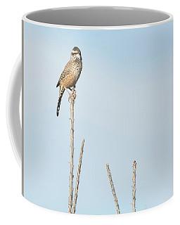 Cactus Wren 7471-101017-1cr Coffee Mug