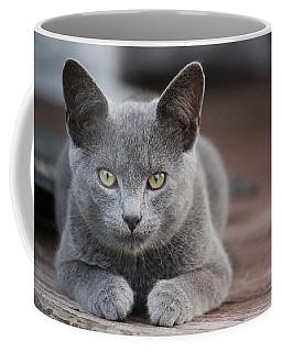 Coffee Mug featuring the photograph Caesar by Rowana Ray