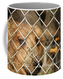Caged Bear Coffee Mug