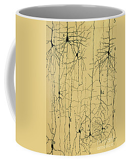 Histology Photographs Coffee Mugs