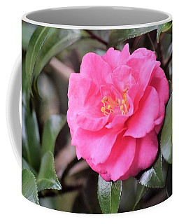Cajun Winter Bloom Coffee Mug by John Glass