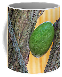 Coffee Mug featuring the photograph Calabash Fruit by Bill Barber