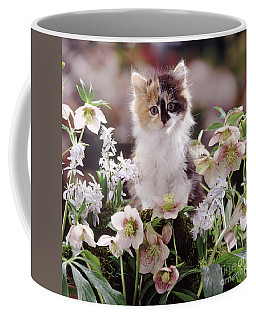 Calico And Scillas Coffee Mug