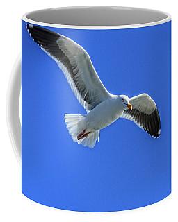 Coffee Mug featuring the photograph California Gull by Robert Bales