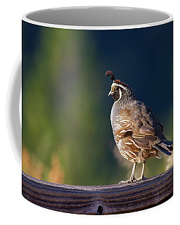 California Quail Coffee Mug