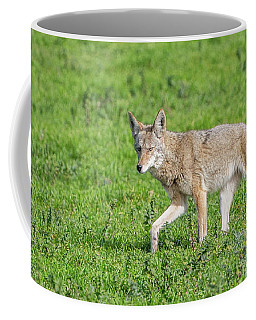 California Walk  Coffee Mug