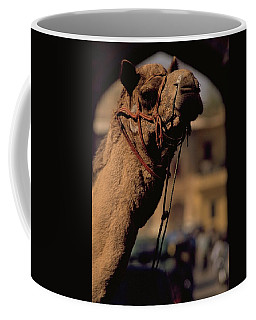 Photograph - Camel In India by Travel Pics