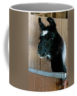 Coffee Mug featuring the photograph Camelid 3 by Catherine Sobredo