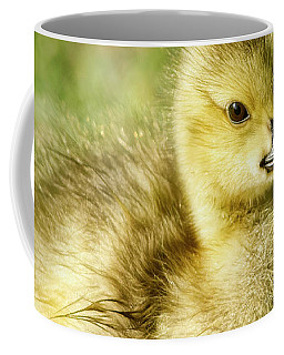 Coffee Mug featuring the photograph Canada Goose Baby by Brad Allen Fine Art