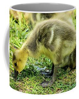 Canada Goose Gosling Coffee Mug by Gary Whitton