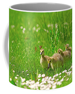 Coffee Mug featuring the photograph Canada Goose Goslings In A Field Of Daisies by Sharon Talson