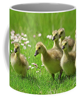 Coffee Mug featuring the photograph Canada Goose Goslings by Sharon Talson