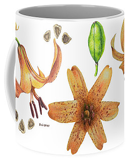 Canada Lily Collage Coffee Mug