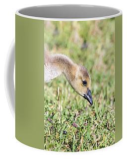 Canadian Gosling Coffee Mug