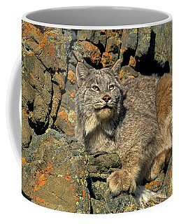 Coffee Mug featuring the photograph Canadian Lynx On Lichen-covered Cliff Endangered Species by Dave Welling