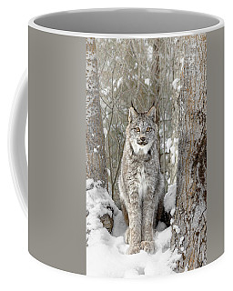 Canadian Wilderness Lynx Coffee Mug by Wes and Dotty Weber