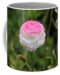 Candy Stripe Ranunculus Coffee Mug