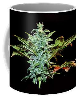 Weed Coffee Mug