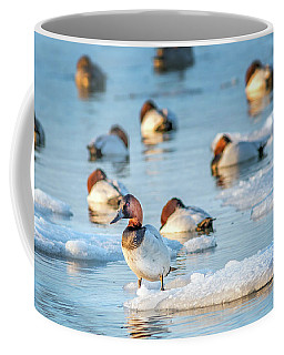 Canvasback Duck Standing On Ice In The Chesapeake Bay Coffee Mug