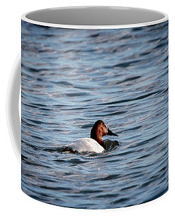Coffee Mug featuring the photograph Canvasback by Gary Hall
