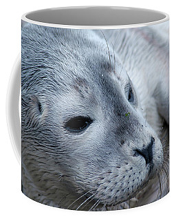 Coffee Mug featuring the photograph Cape Ann Seal by Mike Martin