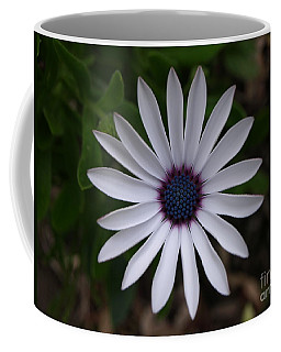 Cape Daisy Coffee Mug