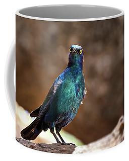 Cape Glossy Starling Coffee Mug