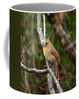 Coffee Mug featuring the photograph Cardinal by Cathy Harper