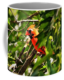 Cardinal In Tree Coffee Mug