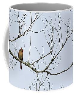 Coffee Mug featuring the photograph Cardinal In Tree by Richard Rizzo