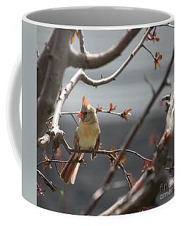 Cardinal Coffee Mug by Mary-Lee Sanders