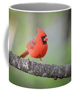 Cardinal On A Limb Coffee Mug