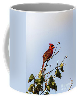 Cardinal On Treetop Coffee Mug