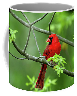 Coffee Mug featuring the photograph Cardinal by Ronnie and Frances Howard