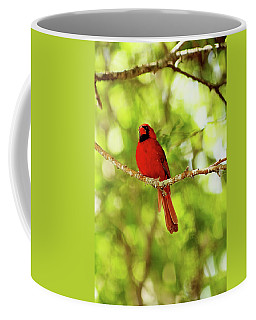Cardinal Stare Coffee Mug