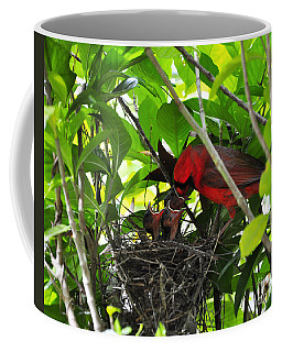Cardinals Chowtime Coffee Mug by Al Powell Photography USA