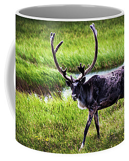 Coffee Mug featuring the photograph Caribou by Anthony Jones