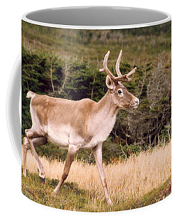 Caribou Coffee Mug