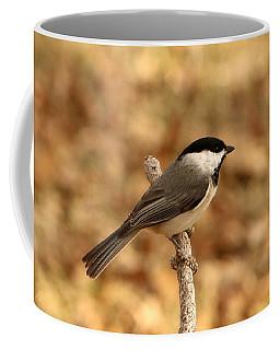 Carolina Chickadee On Branch Coffee Mug