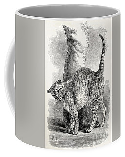 Cat In An Affectionate Frame Of Mind Coffee Mug
