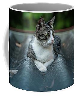 Cat In The Cradle Coffee Mug