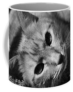 Cat Naps Coffee Mug