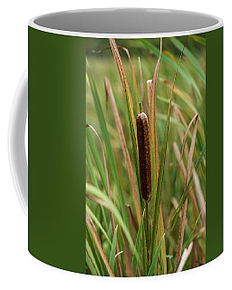 Coffee Mug featuring the photograph Cat Tail by Paul Freidlund
