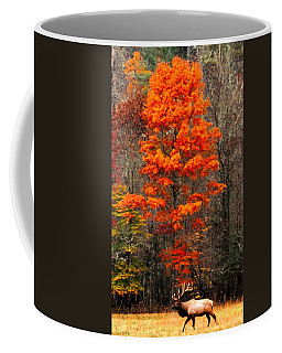 Cataloochee Color Coffee Mug