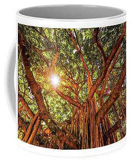 Coffee Mug featuring the photograph Catch A Sunbeam Under The Banyan Tree by D Davila