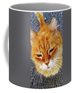 Cats Of Amalfi - Amalfi, Italy Coffee Mug