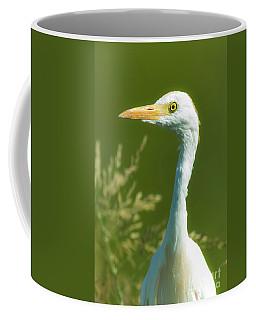Cattle Egret  Coffee Mug